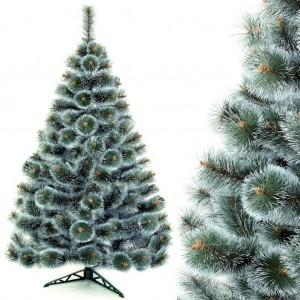 Hustá vánoční borovice se zeleno bílým jehličím