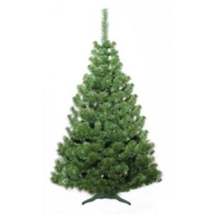 Vánoční stromek jedle