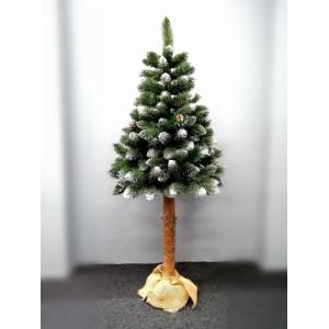 Vánoční stromek borovice na pařezu v zelené barvě