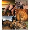 Dekorační přikrývky a deky v hnědé barvě se zvířaty z Afriky