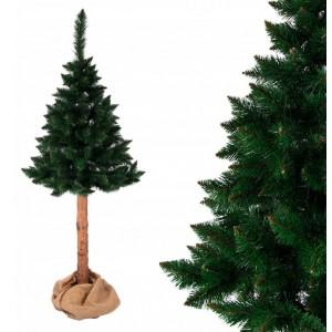 Nádherně hustá vánoční borovice na pni 150 cm